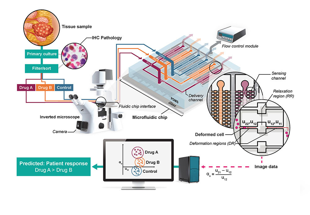 An infographic for a microfluidic chip